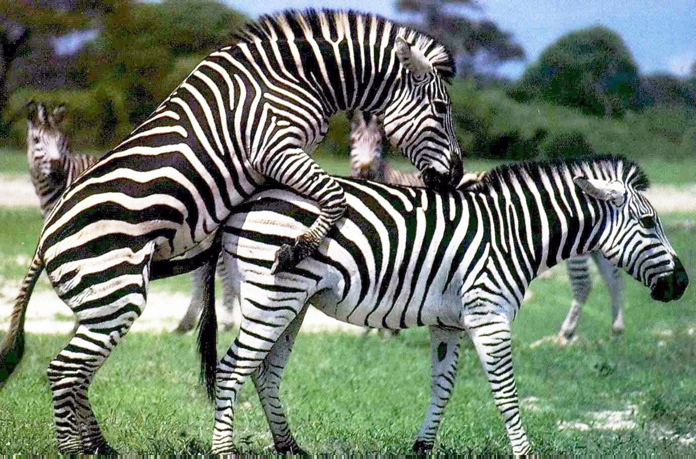 Animals Mating | Animal Mating Best Moment Compilation ...