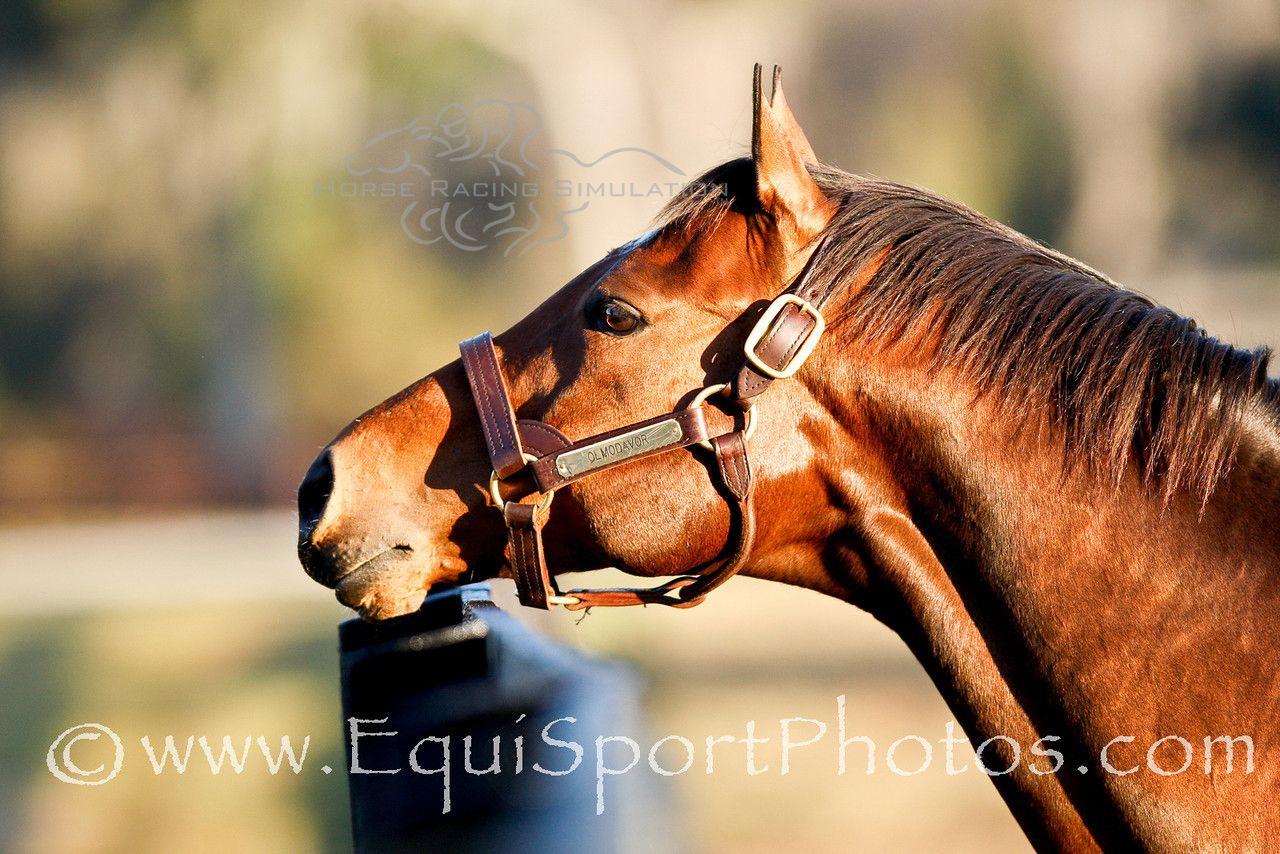 Olmodavor began his stallion career at Adena Springs Farm