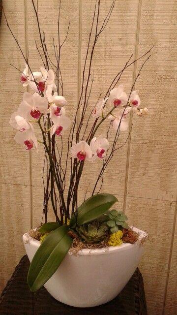 #planter #tropicalplants #gardencentre #gardendecor #mygarden #notl #regalfloristandgardencentre #florist #garden