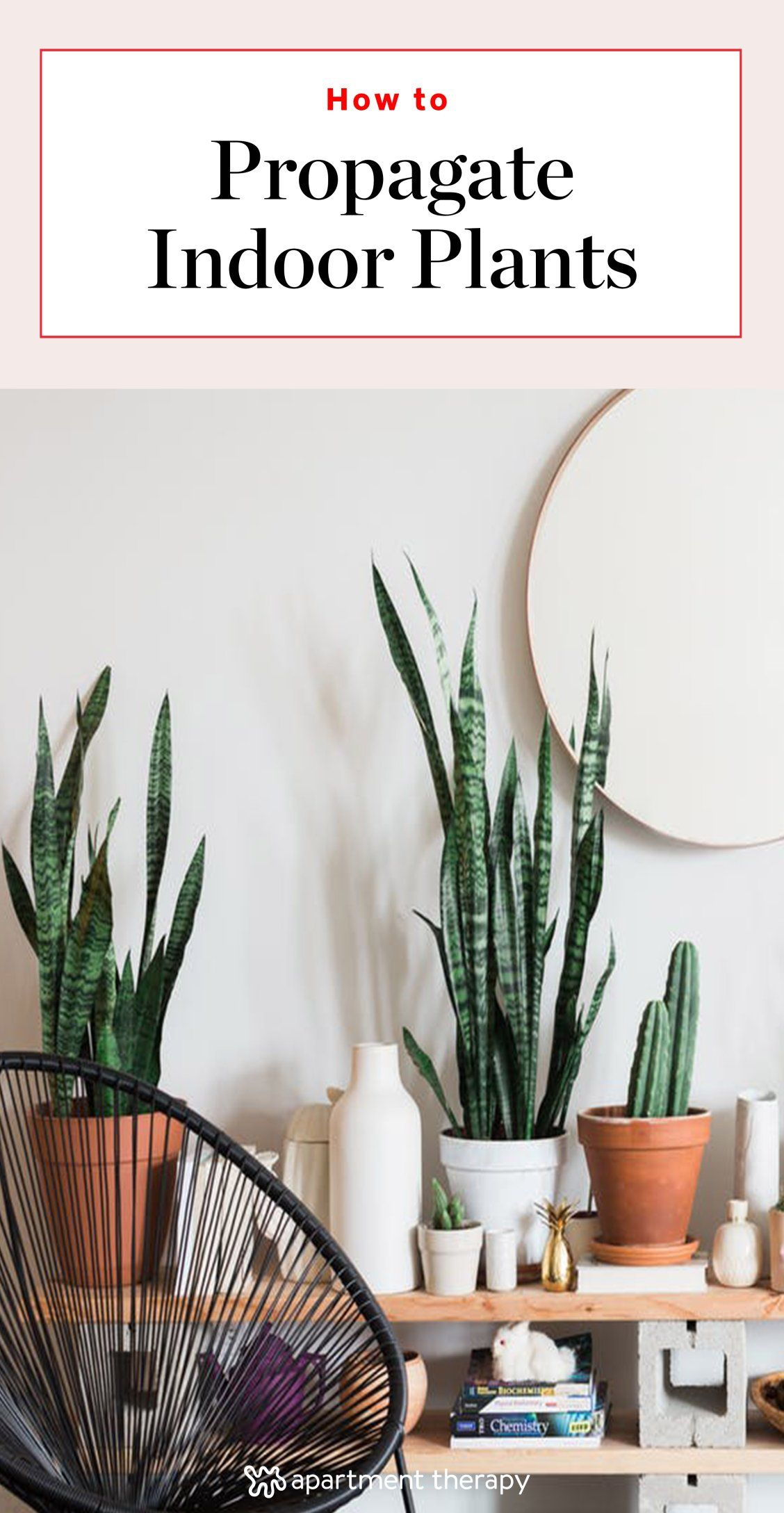 Propagation Station: How To Make Plant Babies |  Here is everything you need to know about starting new plants from leaves and old ones. Grow your indoor plant family with these tips and tricks!
