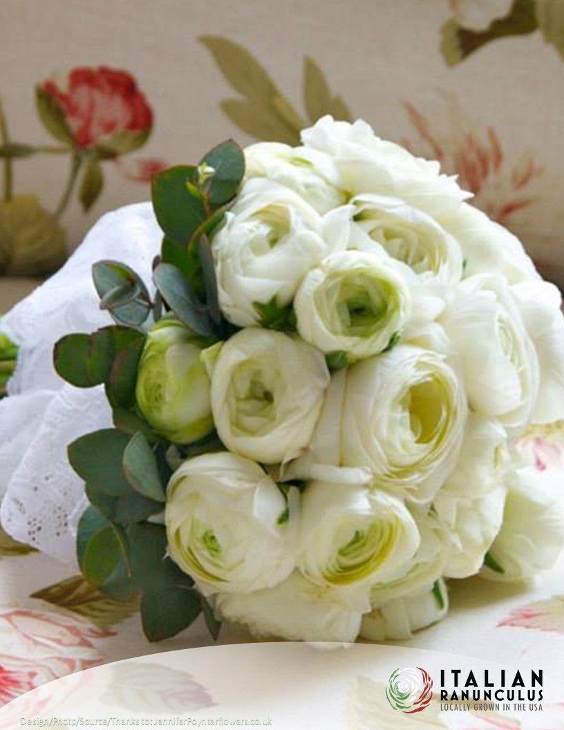 White Italian Ranunculus