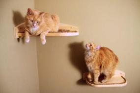 Natural cat climbers