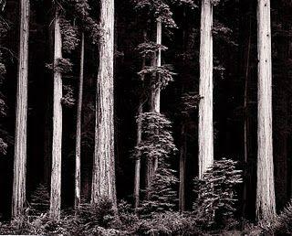 An Ansel Adams photograph... He's my second most favoritest photographer.