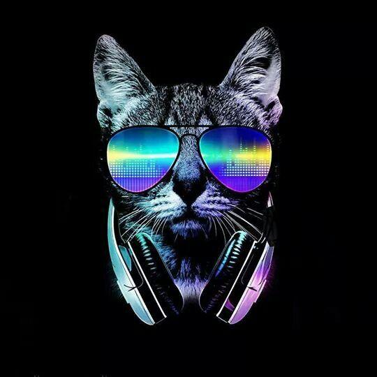 Cat Tshirt, Cat Shirts Funny, Cat Posters