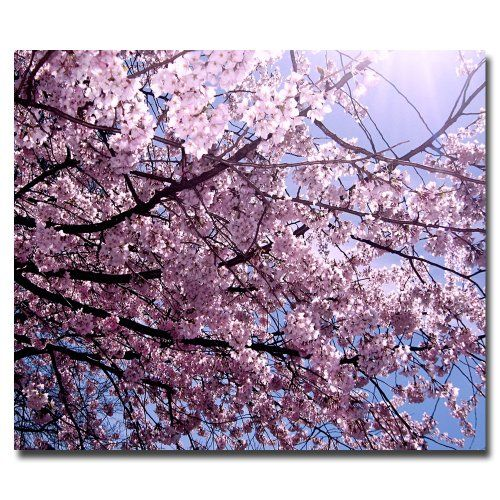 Trademark Fine Art Cherry Blossom Flare By Ariane Moshayedi Canvas Wall Art 18x24inch Details Can Be F Trademark Fine Art Cherry Blossom Framing Photography