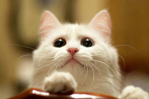 Eu amo gatos - Google+ - #miau  #cute  #cat  #photography
