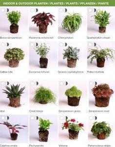 Návrh rastlín