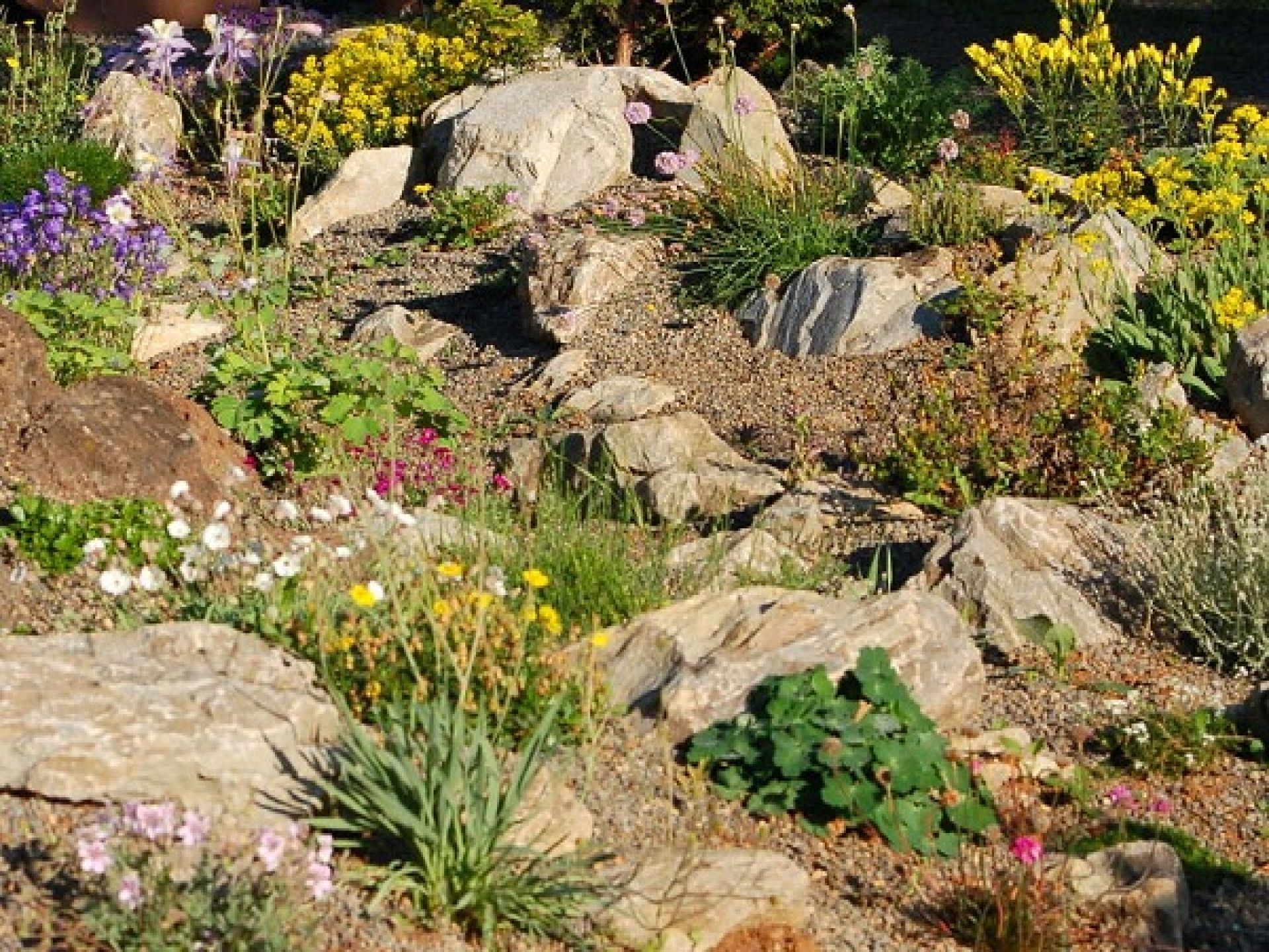 1920x1440 Wild Ginger Farm Rock Garden Front Yard Jpg 1920 1440