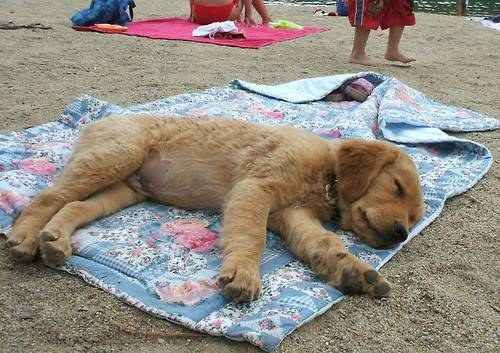 Awwww Puppy Dogs Puppies Super Cute Animals
