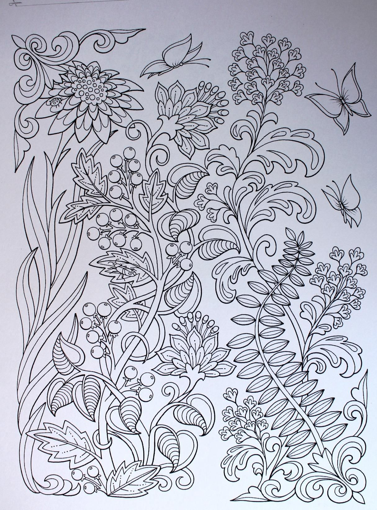 Amazon.com: Garden Paths Coloring Book: Inc. and Kathryn Marlin ...