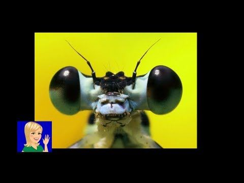Insects | free Online Preschool | Cullen's Abc's    http://online-preschool.cullensabcs.com/themes/