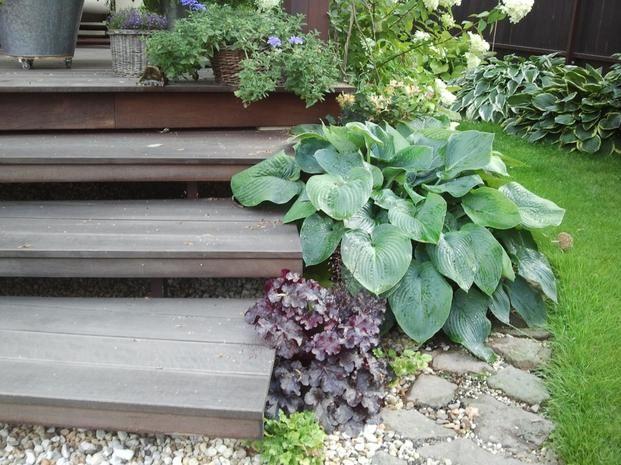 Rosliny Ozdobne Z Lisci Co Zrobic Aby Ogrod Byl Atrakcyjny Caly Sezon Plants Garden Outdoor