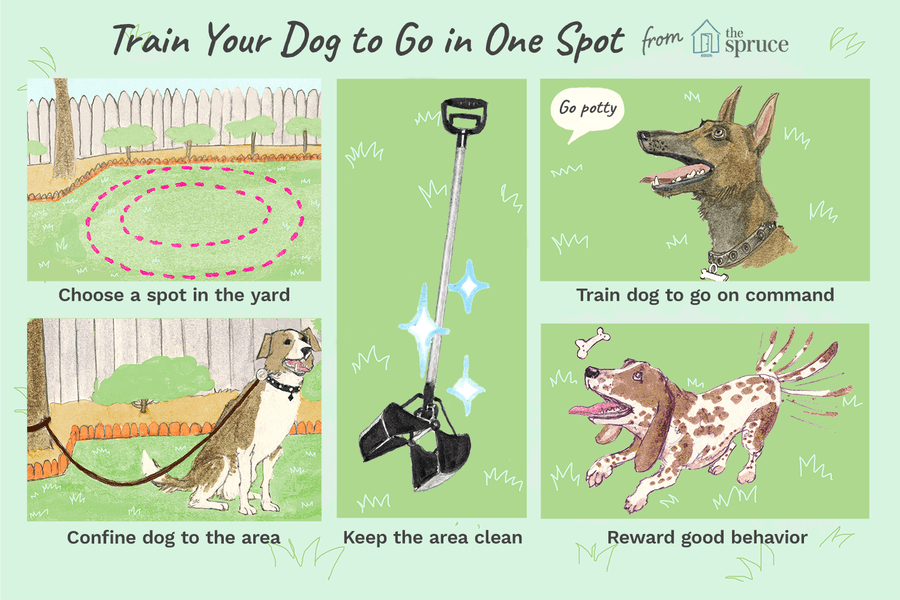 Illustration Of How To Train You Dog To Go Potty In One Spot Training Your Dog Dog Training Dog Potty