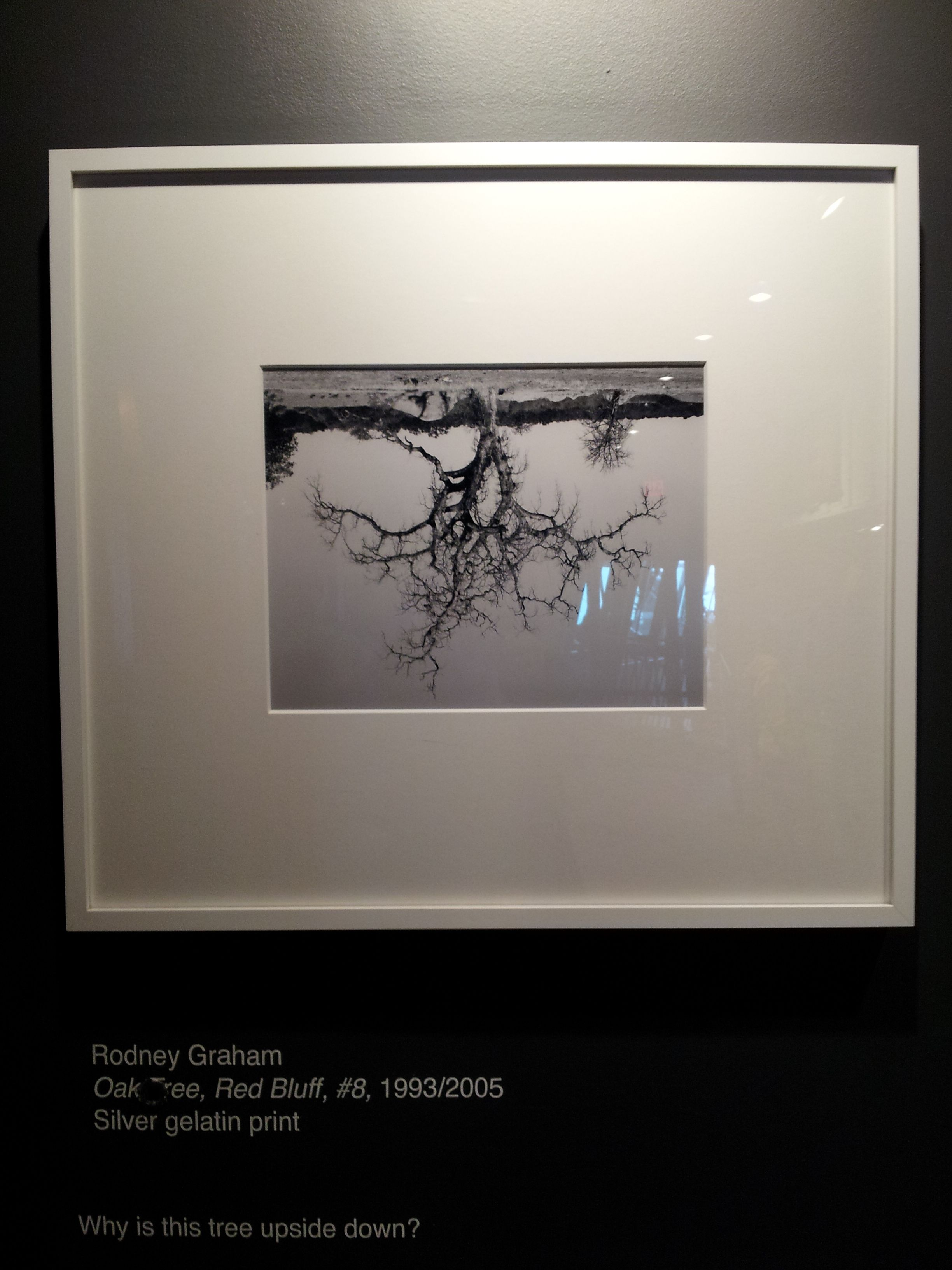 Oak Tree, Red Bluff 8 by Rodney Graham. Why is this tree