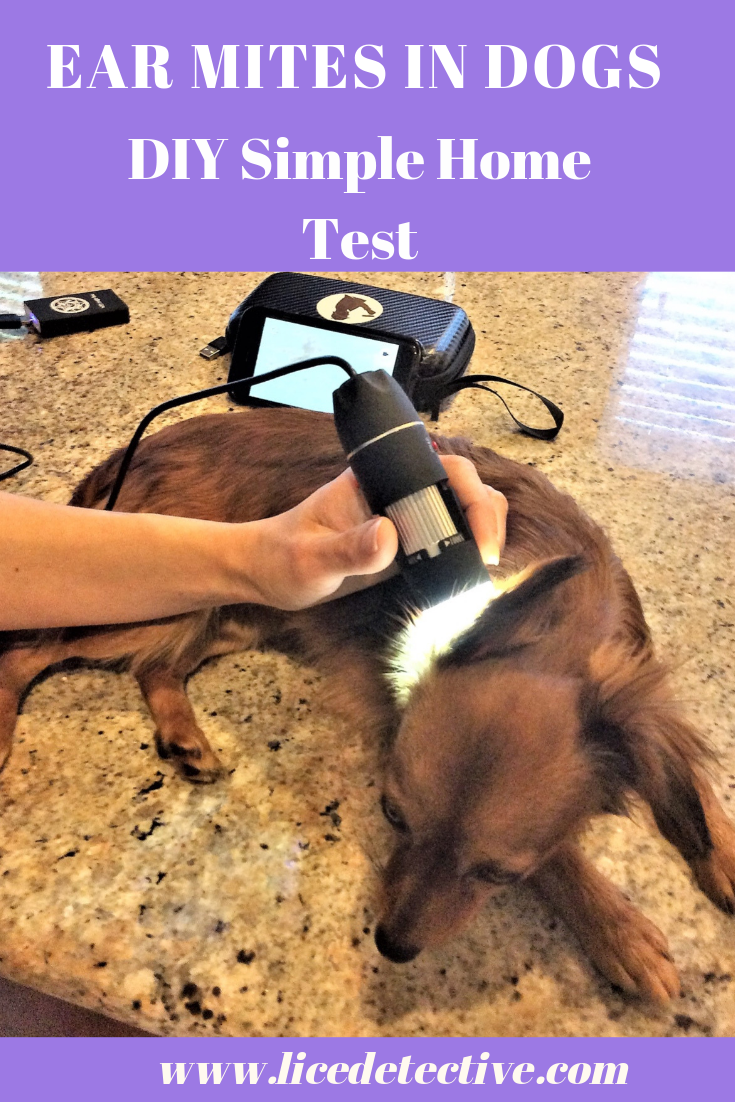 Ear Mites are Highly Contagious Dog health care, Pet