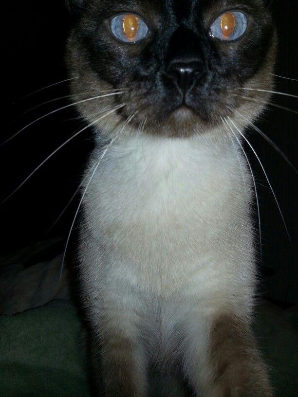 Skylar, This was taken in dark w/flash I felt her crawling up the Bed  & shocked her w/camera lol.
