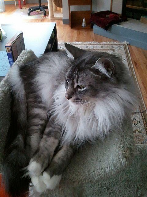 Adorable cat is being adorable | Flickr: Intercambio de fotos
