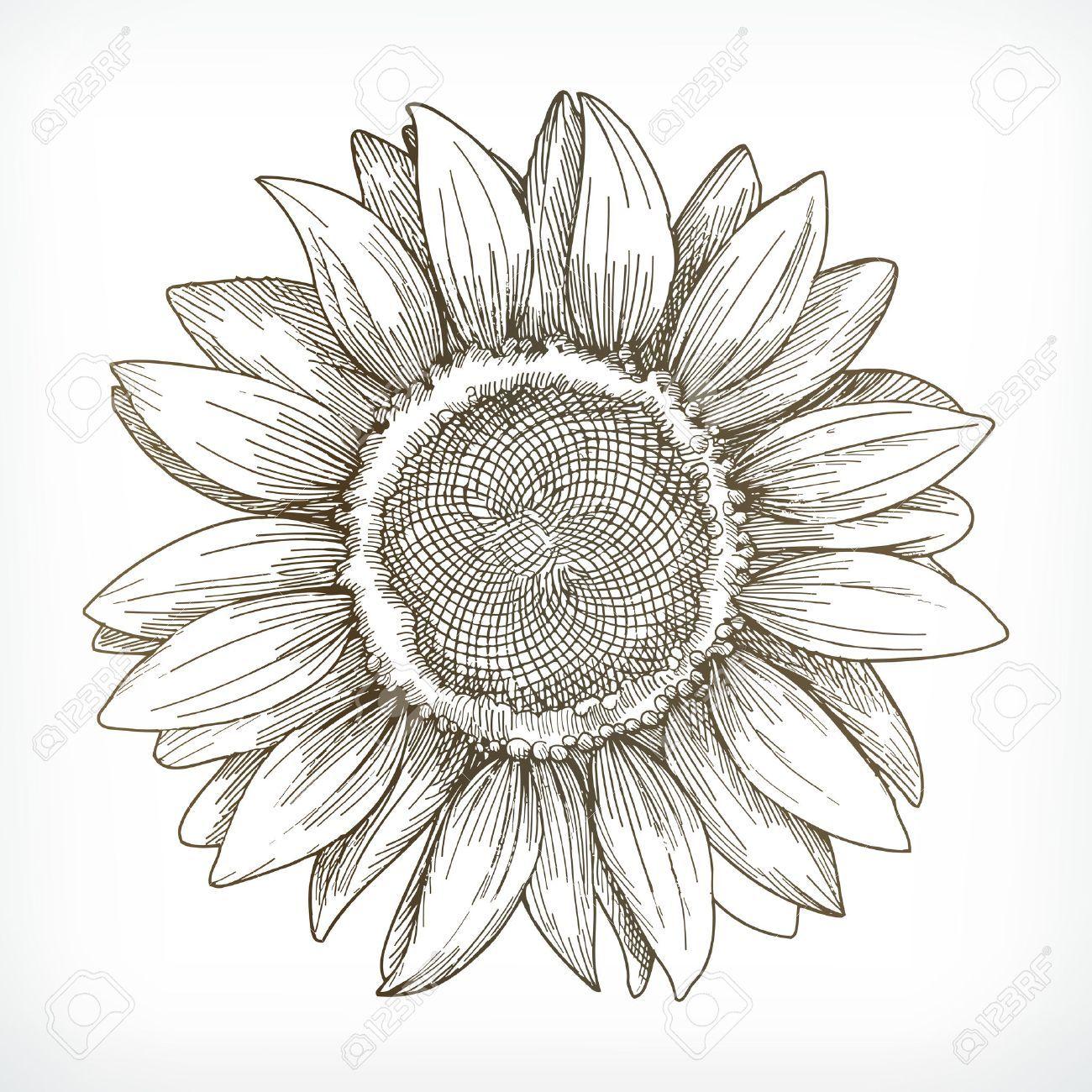 Resultado De Imagem Para Illustration Girasoles Dibujo Flores Dibujadas A Lapiz Ilustracion De Girasol