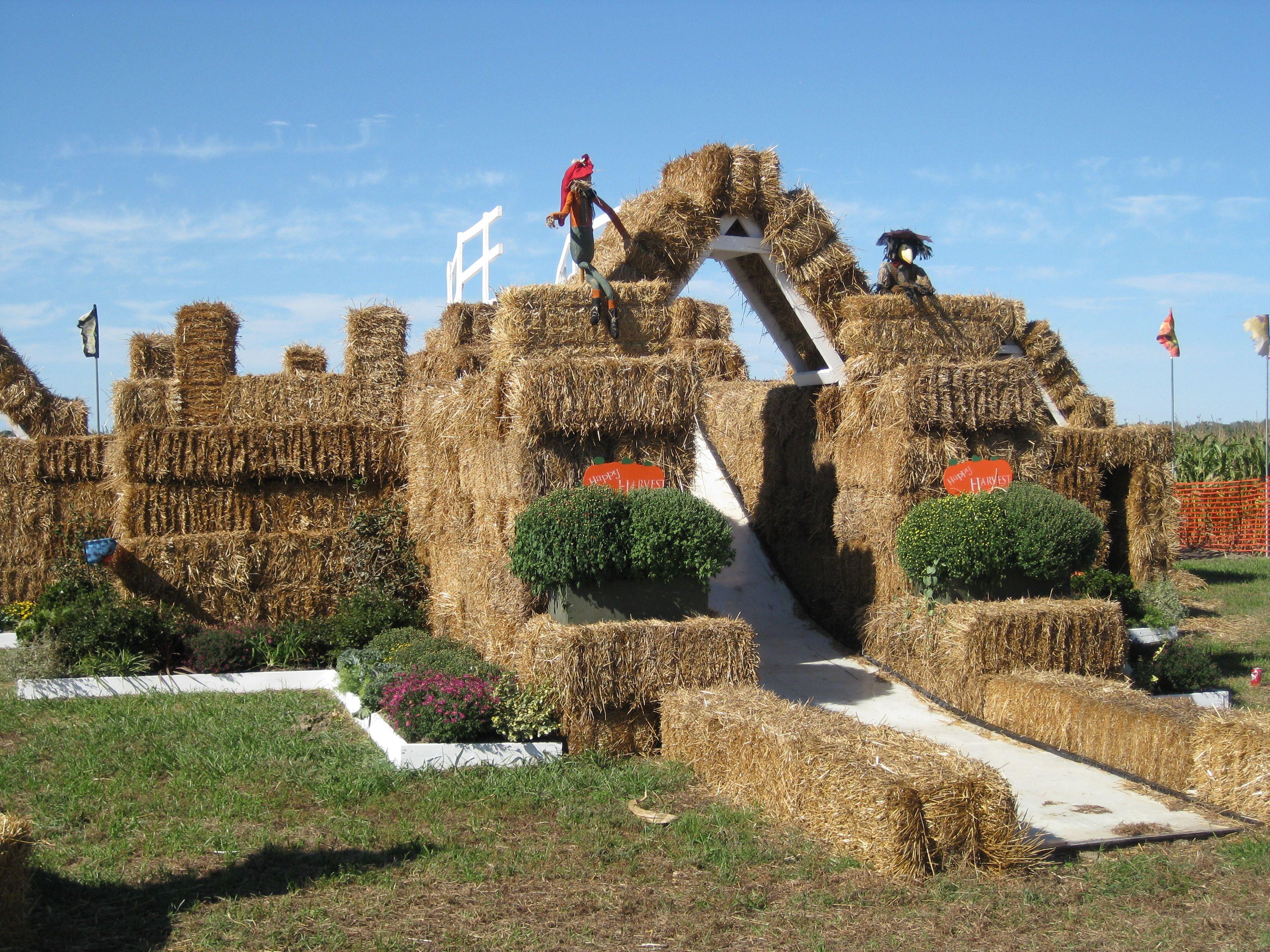 Thies Farm Pumpkinland   Home Sweet Home: St. Louis   Pinterest