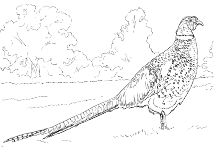 pheasant bird coloring pages tree coloring page animal