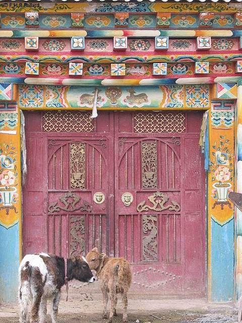 Xhongdian Tibetan Village door.Que belleza pero miren que belleza,me gustan hasta los terneros.