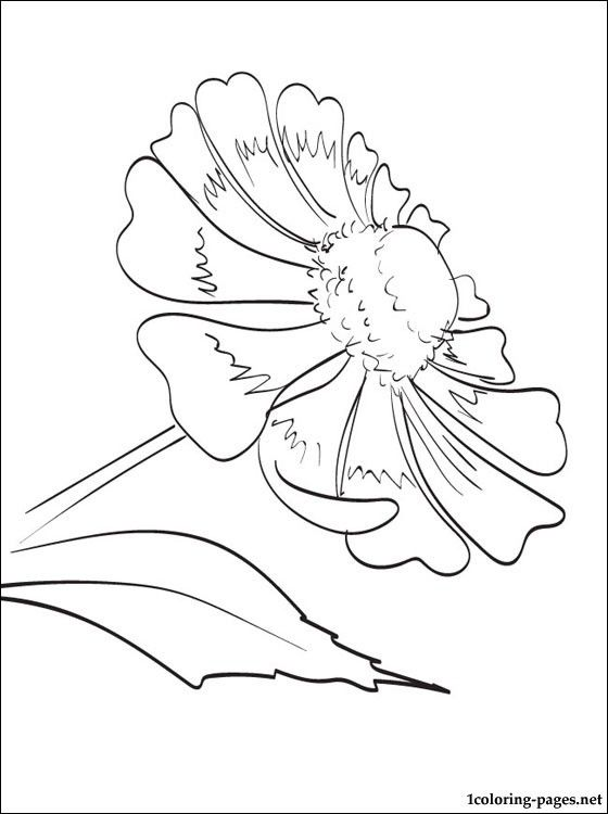 helenium coloring page for kids coloring pages