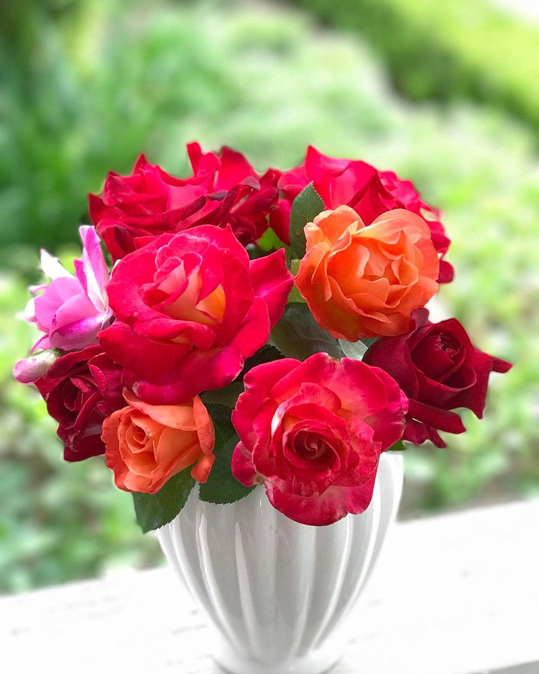 If Only You Could Smell These Roses So Incredibly Sweet And No