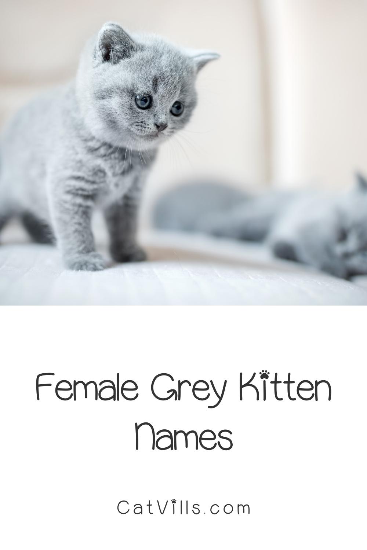 Pin On Cute Cat Names