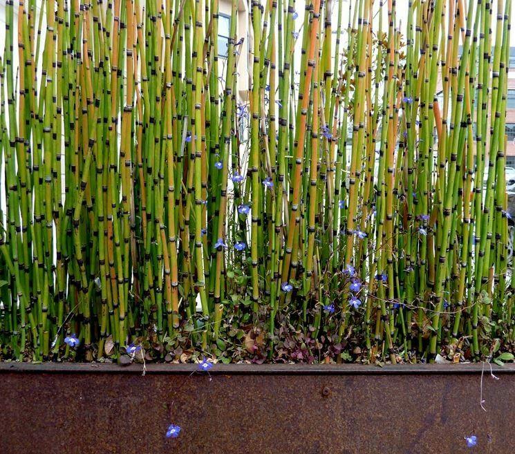 Pin by Francesca Butani on siepe alternativa | Pinterest | Terrazzo