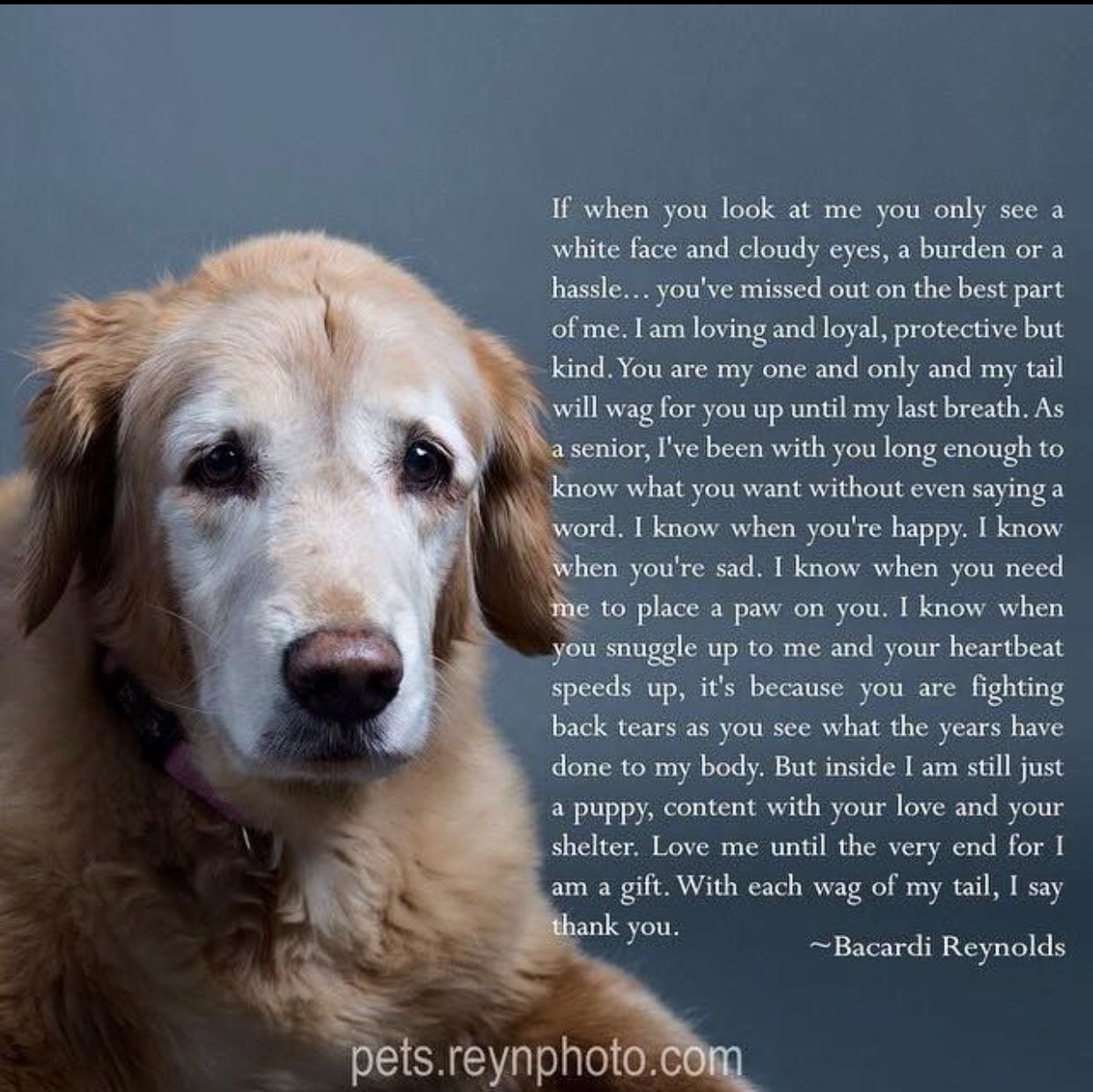 Ohhh Now I M Crying Dog Poems Senior Dogs Quotes Dog Quotes