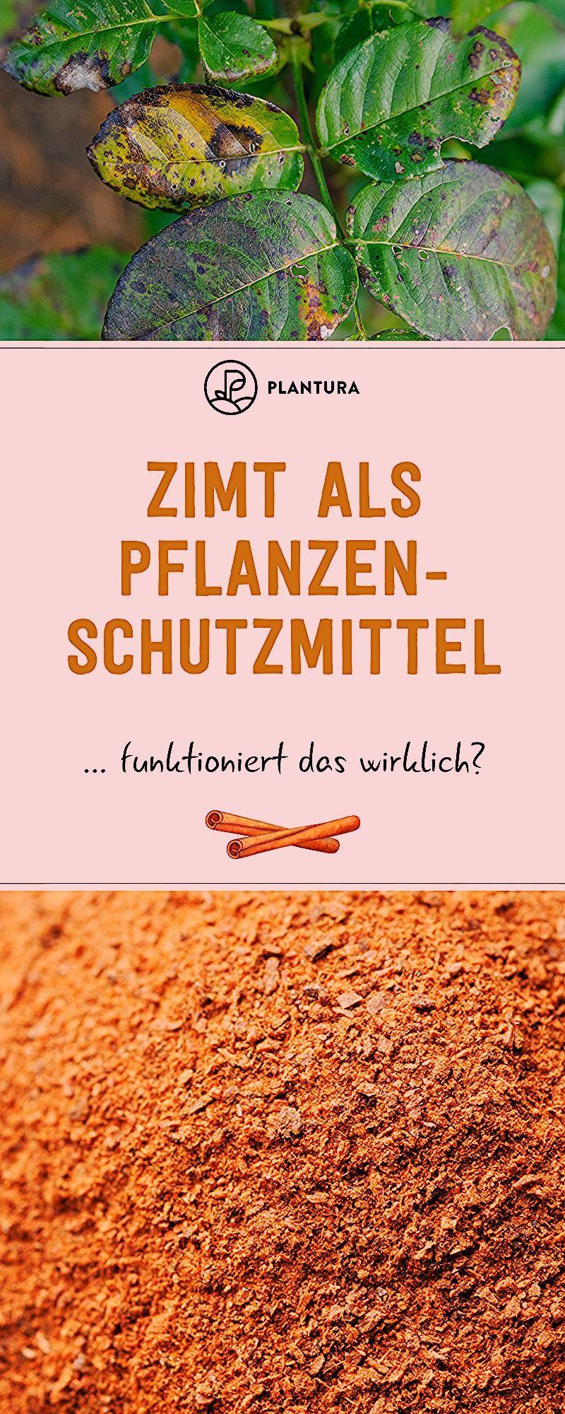 Photo of Zimt im Garten: Ein sinnvoller Pflanzenschutz? – Plantura