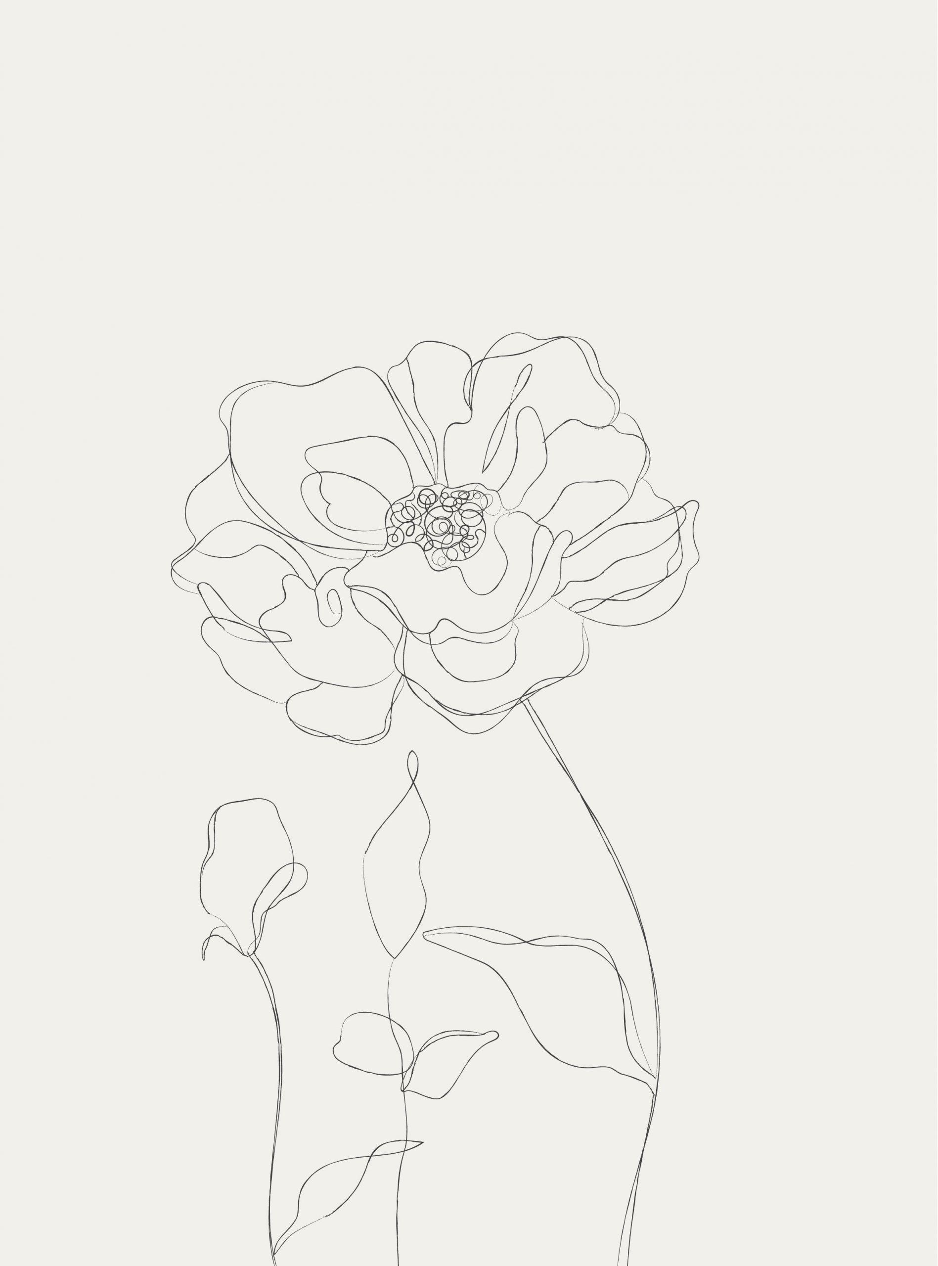Minimalist Botanical Line Illustration - galerie design studio#botanical #design #galerie #illustration #line #minimalist #studio