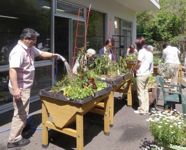人にやさしい家庭菜園 ベジトラグ Plants