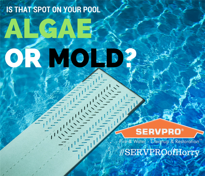 Mold Remediation Is That Algae Or Mold On My Pool Mold Remediation Mold Remover Mildew Remover