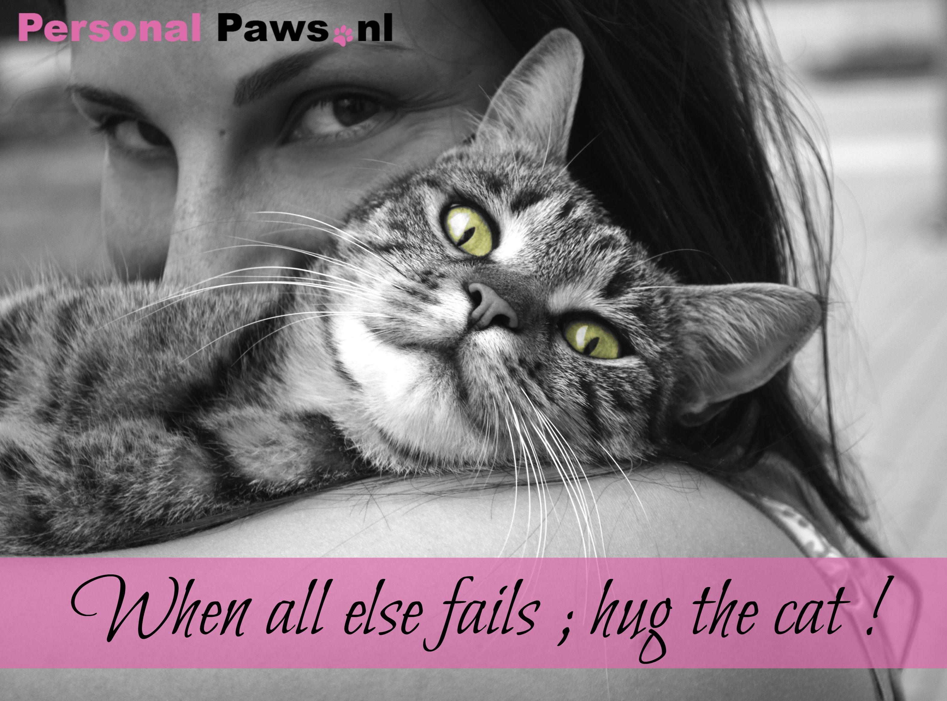 Quote Kat Week 36 Gekke Katten Kat Gedrag Kat Fotografie