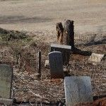 PGMS Needs Volunteers for Odd Fellows Cemetary Restoration