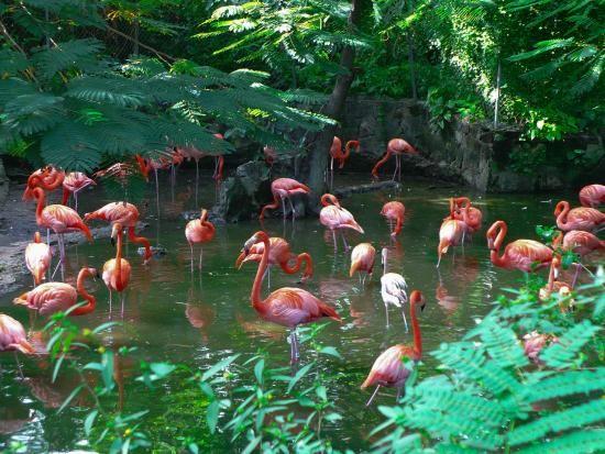 a117faccd08515be52223db001256e54 - Nassau Bahamas Ardastra Gardens And Zoo