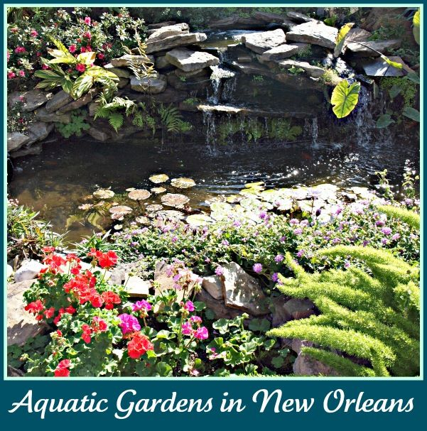 New Orleans Gardens Aquatic Garden Beautiful Gardens Garden