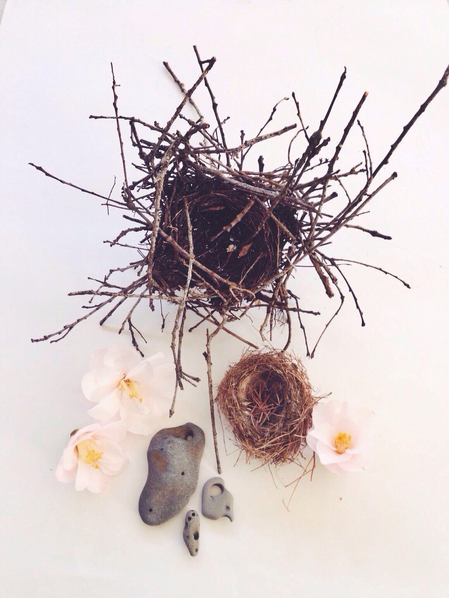 Birds nests, Camellias, and Holey stones @wildthorne on Instagram