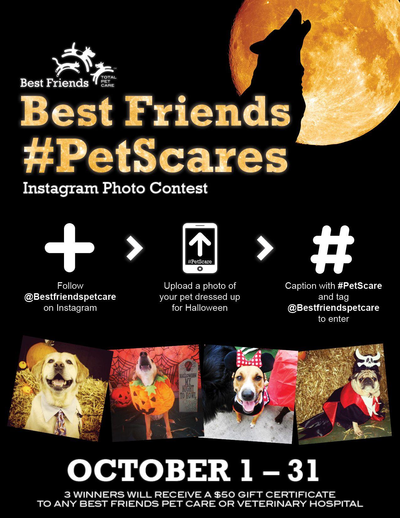 Instagram Contest Fun Enter The Best Friends Petscares Halloween