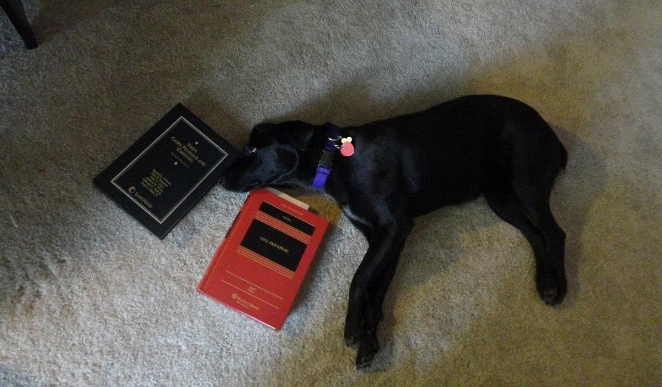Law puppy> tired brain