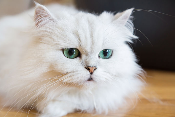 A Guide for Leaving Your Feline Friend Alone at Home