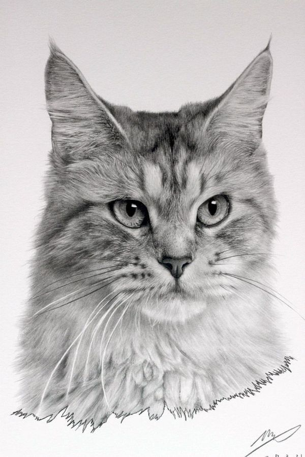 Pin by J.E. Hart on Cat Art Realistic cat drawing