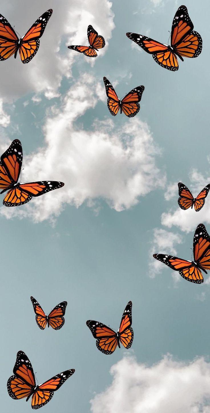 Pin on fond d'écran aesthetic   Butterfly wallpaper iphone ...