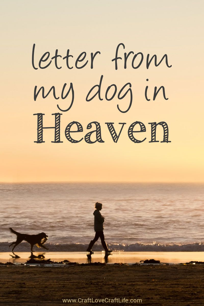Letter From Heaven Dog Quotes