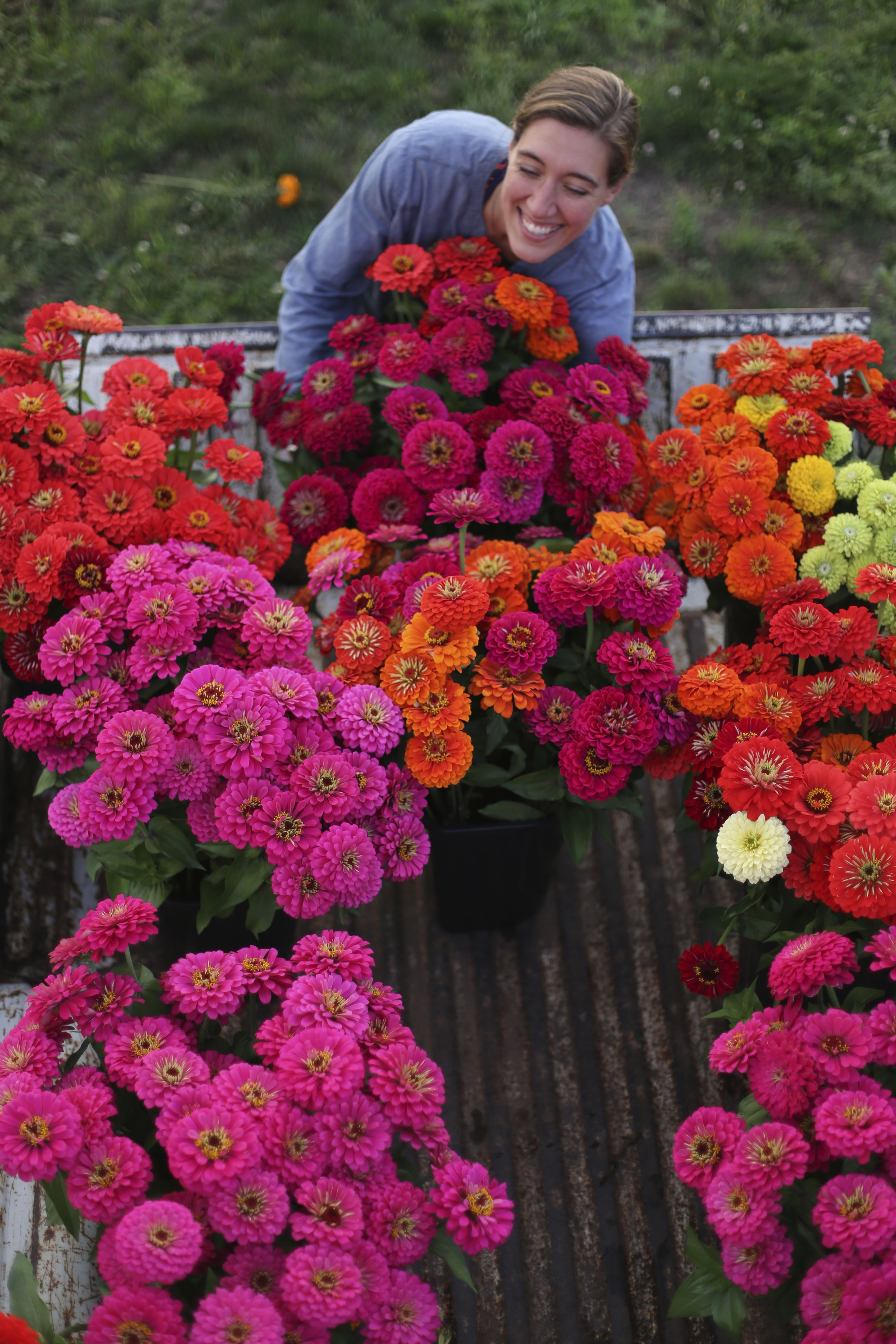 Growing zinnias - one of my favorite Summer flowers! They make the ...