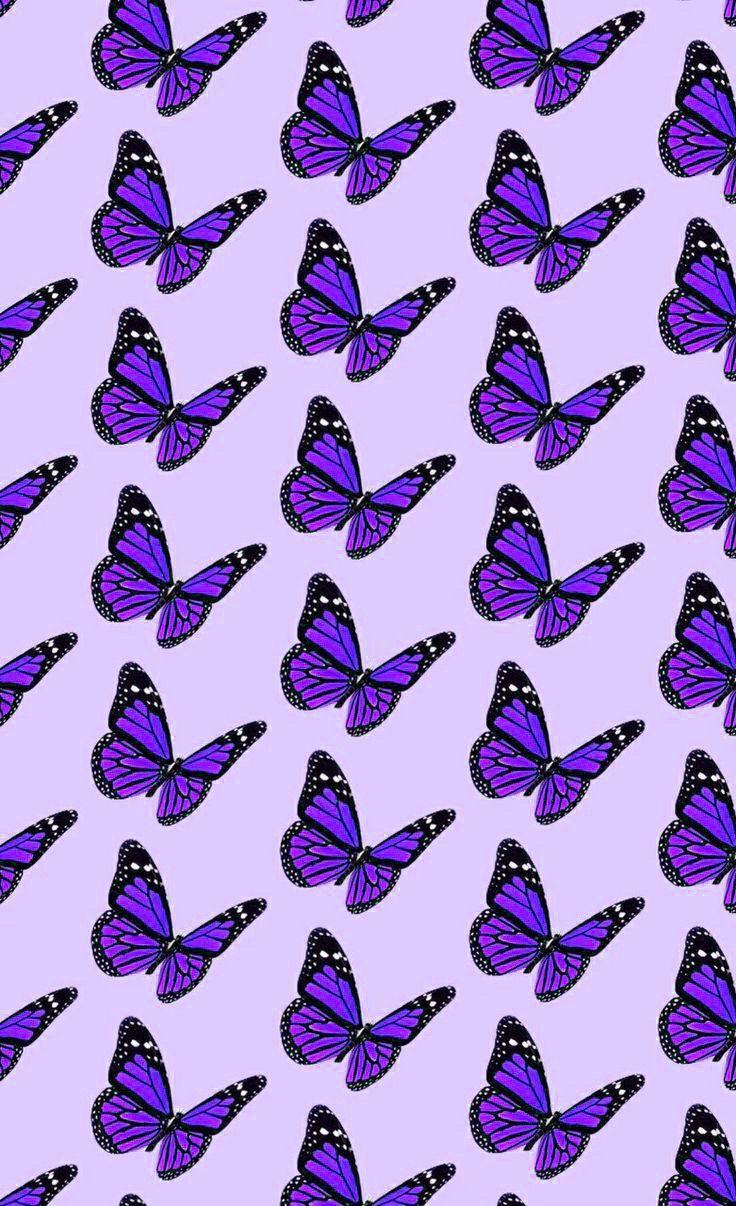 Purple Butterfly Wallpaper Aesthetic : purple, butterfly, wallpaper, aesthetic, Butterfly, Wallpaper, Wallpaper,, Purple, Iphone