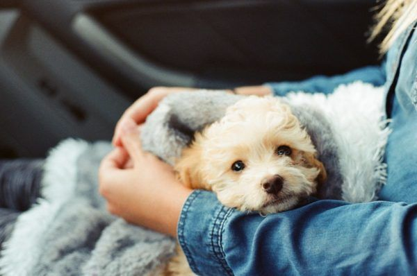 Tips for bringing home a new puppy. Getting a new puppy