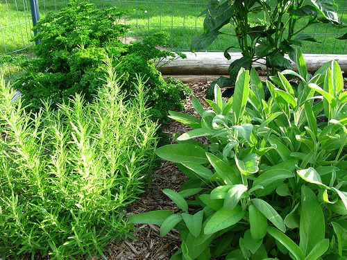 4 Strategies for Making a Healthy Herb Garden