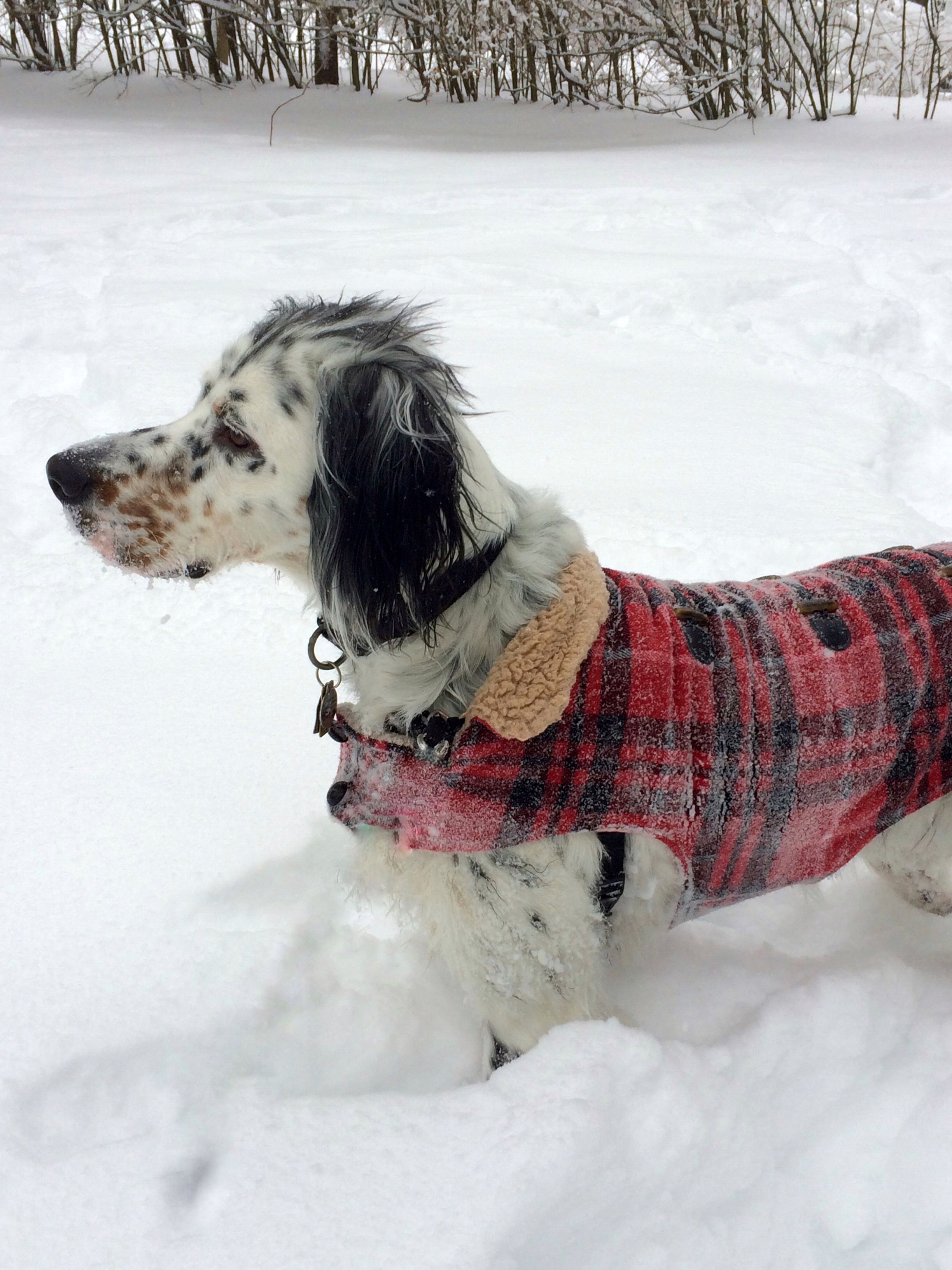 I Love The Snow And I Love My Red Coat Tiere